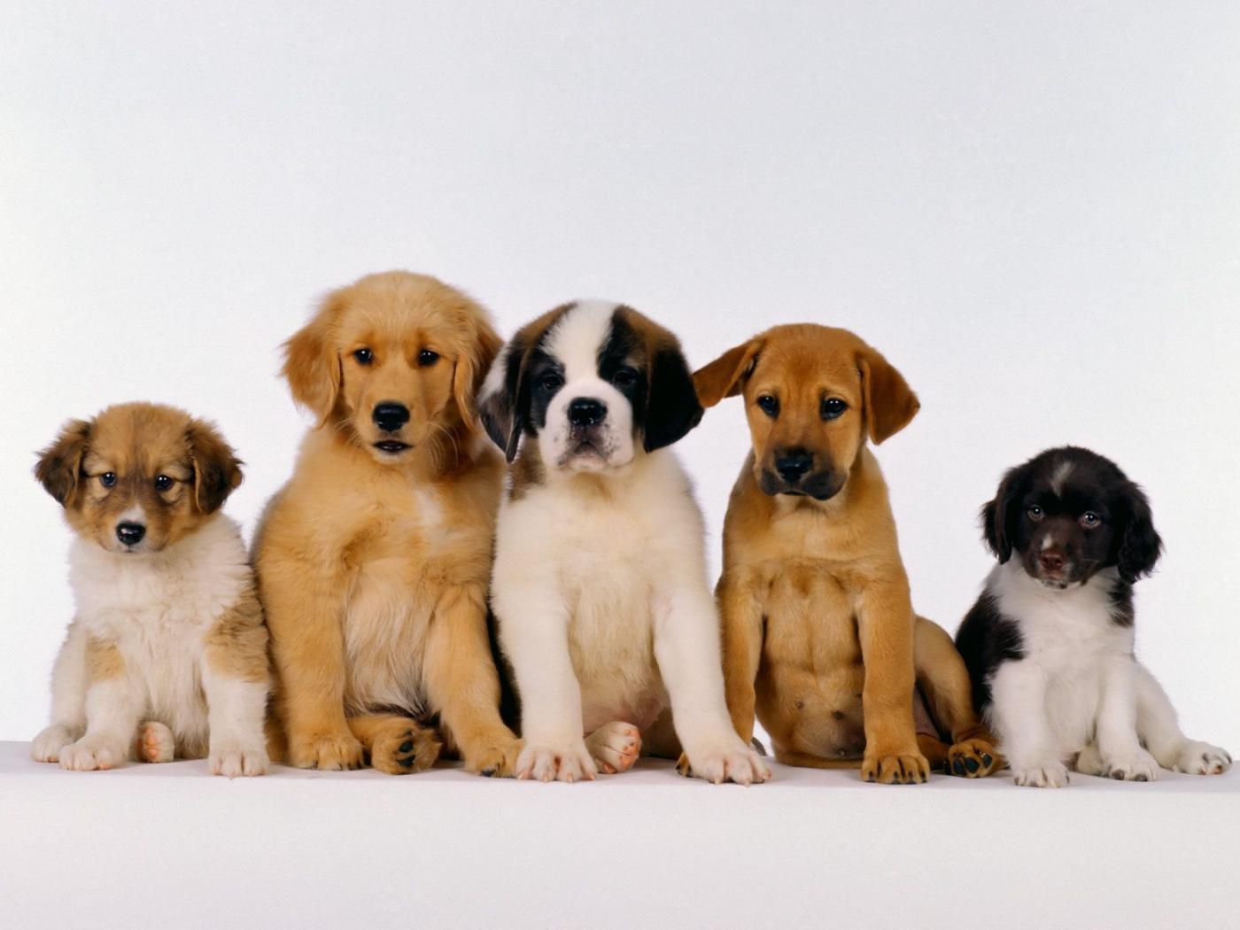 Dog Responsibilities